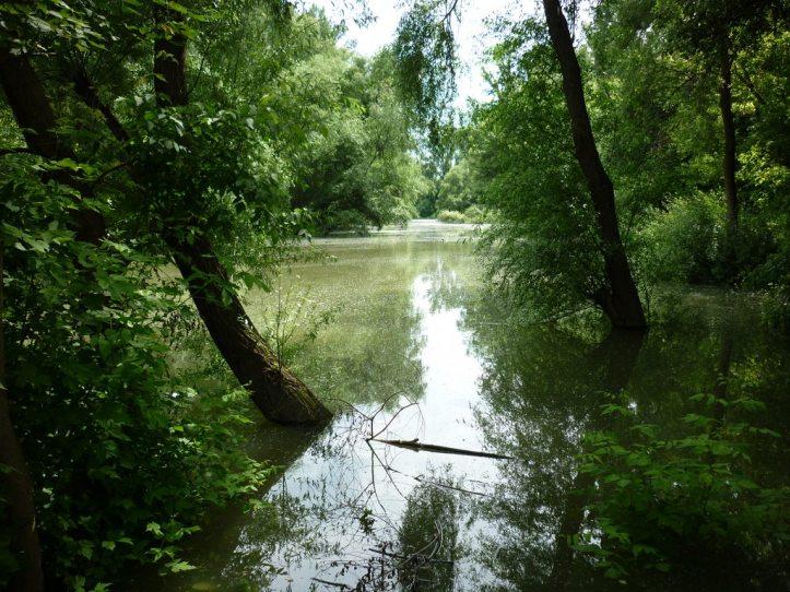 3. kép. A Kárpátok hegyvonulatai felől a Pannon-tóba igyekvő folyók mentén galériaerdők alakultak ki, amely paradicsomi környezetet jelentett az óriáscickányok számára. A kedvező viszonyok között a Crusafontinák sokáig fennmaradhattak. (Mészáros Sára felvétele.)